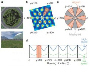 Evidence for grid cells in a human memory network